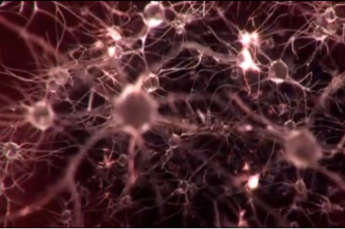 The power of nerves (part 1)